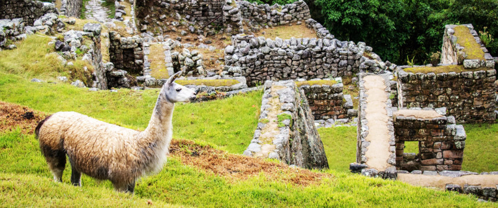 south-america-peru-ruins-llama-tours