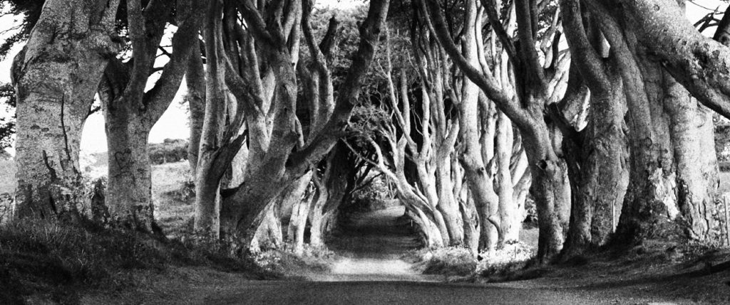 europe-ireland-the-dark-hedges-tours