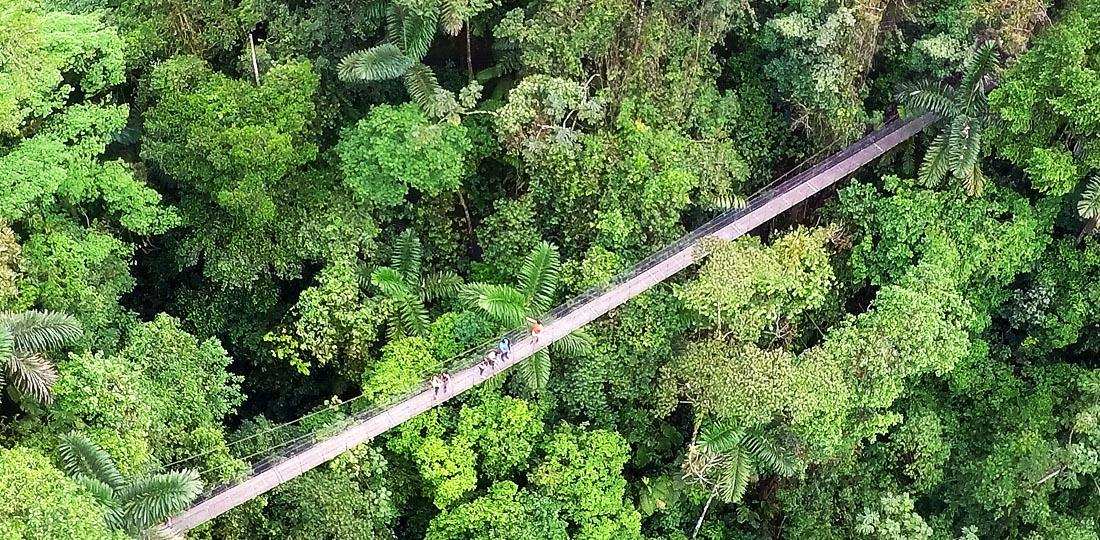 Travel-2020-central-america-costa-rice-pure-vida-hanging-bridge-mistico-park2