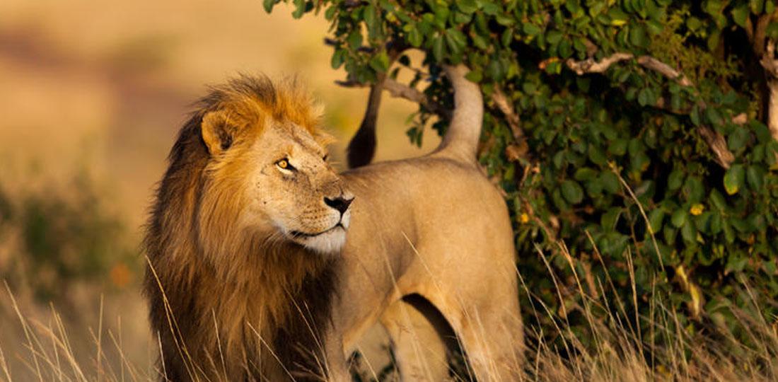 Travel-2020-africa-kenya-tanzania-safari-GALLERY-masai-mara-game-reserve