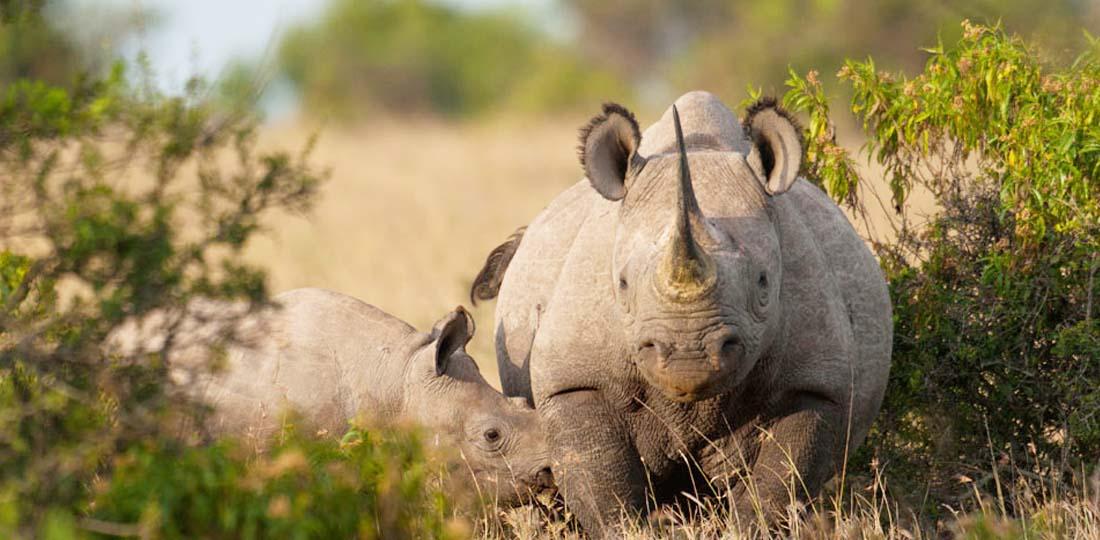 Travel-2020-africa-kenya-tanzania-safari-GALLERY-serena-mountain-lodge-rhino