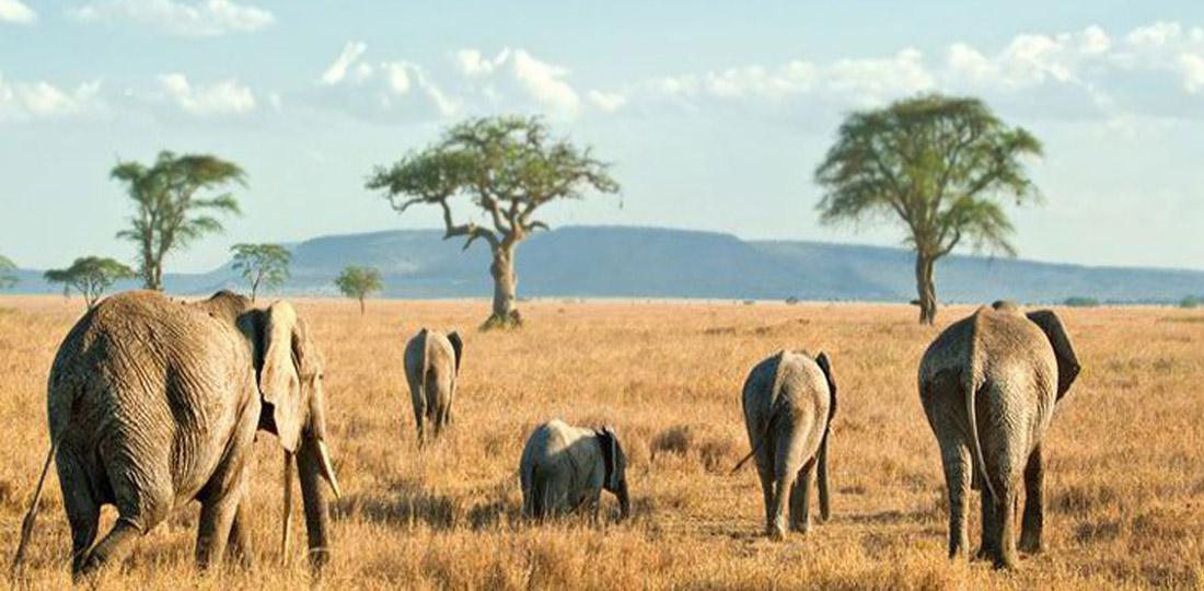 Travel-2020-africa-kenya-tanzania-safari-GALLERY-serengeti-national-park-elephants